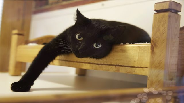 Looking to declaw your cat? Don't look in New York anymore