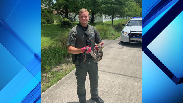 Florida deputy finds python during traffic stop