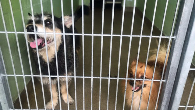 Panting pups get relief at Orange County Animal Services