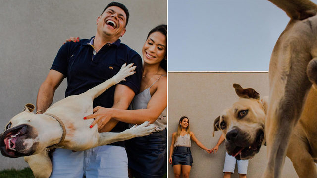 Viral photos show puppy stealing spotlight in couple's photo shoot
