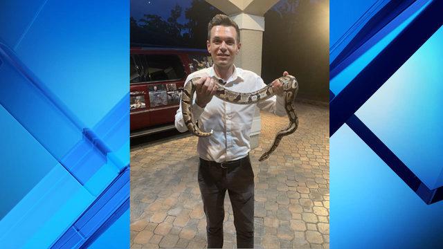 4-foot python found near downtown Orlando