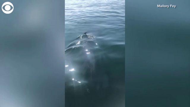 Family spots shark off coast of Massachusetts