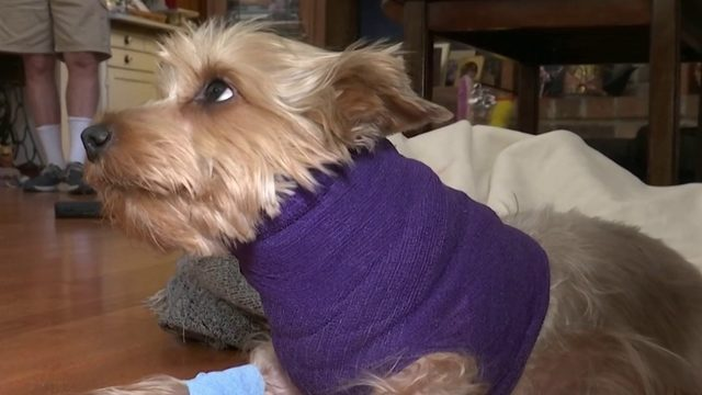 Winter Springs woman warns pet owners after her dog was attacked
