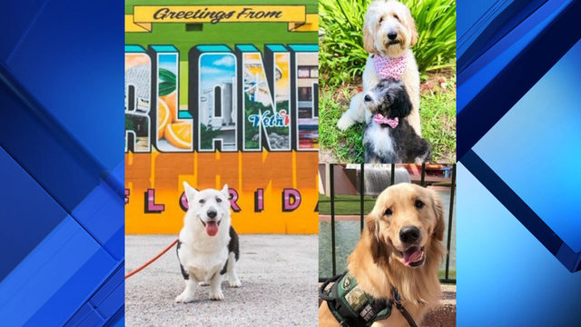 These Orlando area Instagram famous dogs have influencer game