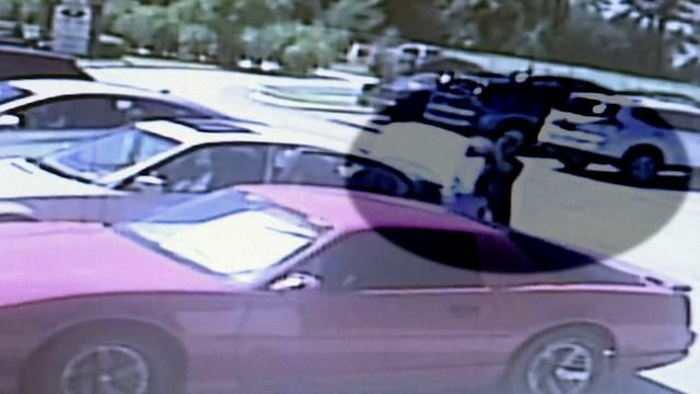 Animal Services investigating video of dog thrown in car trunk