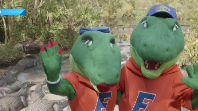 Florida Gators mascots visit Gatorland