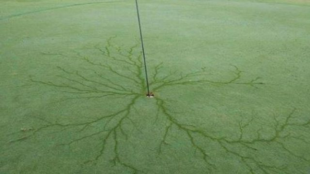 Holy-in-one: Lightning strike leaves electric design on golf course