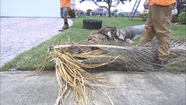 Tree trimming service prepares for Tropical Storm Dorian