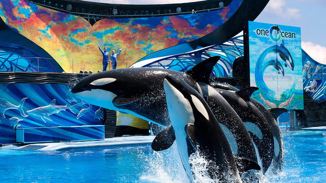 Florida teachers get year of free unlimited entry to SeaWorld Orlando