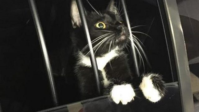 Florida cat burglar turns out to be a cat