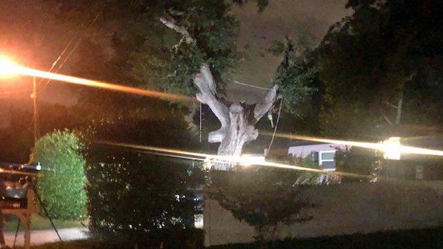 Ocoee man falls to his death trimming tree before Hurricane Dorian