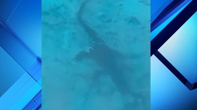 Woman spots gator in her pool in Altamonte Springs