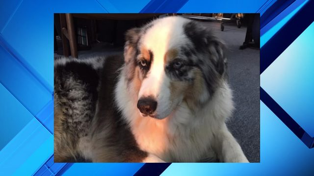 Report: Ski World Orlando's dog greeter Marley could be deemed dangerous…