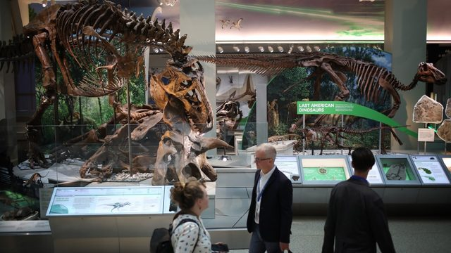 Celebrate Museum Day with free admission this Saturday