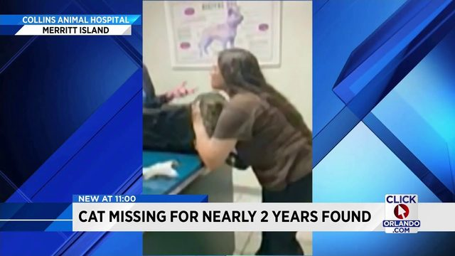 Missing Orange County cat found in Merritt Island nearly 2 years later