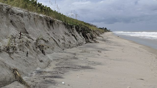 8,000 turtle nests washed out by Hurricane Dorian in Florida
