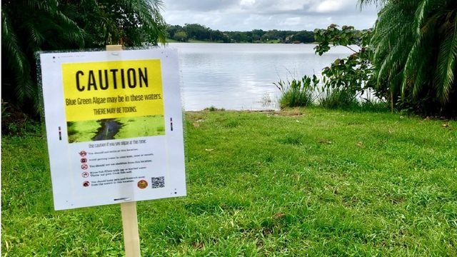 Blue-green algae found at Orange County lake; health alert issued