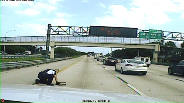 Florida officer saves dog hit on busy highway