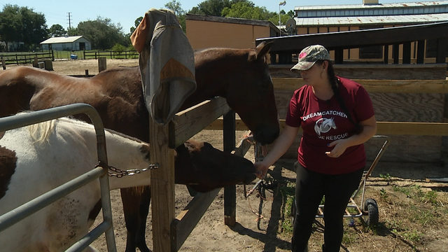 'They all have a broken past:' Rescue gives neglected horses a second chance
