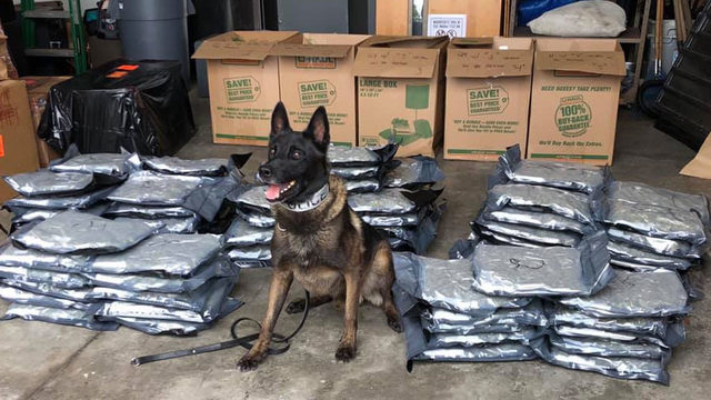 Ocala K-9 helps police seize 94 pounds of marijuana during traffic stop