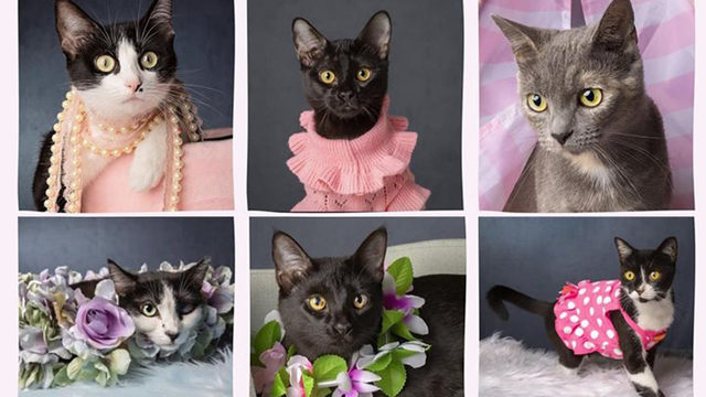 'The Real Housecats of Southeast Volusia' available for adoption