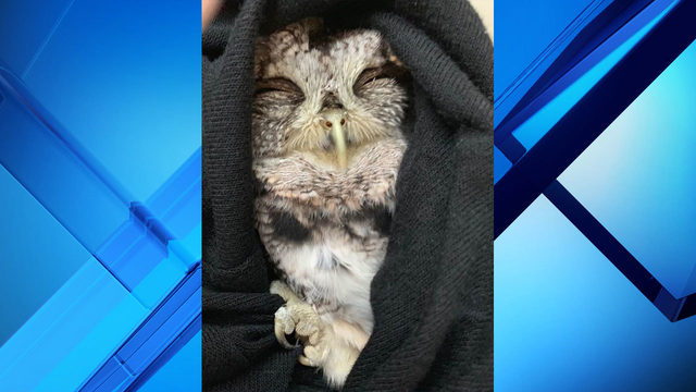 Retired officer rescues injured owl from highway