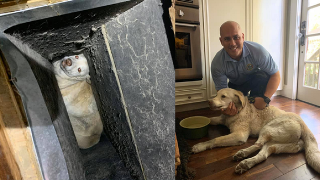 Not cool: Dog gets trapped in air vent inside Orlando home