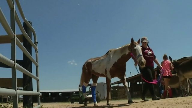 Rescue helps neglected, abused horses