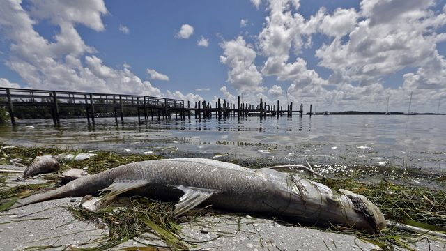 Swimmers beware: Red tide is back in Florida