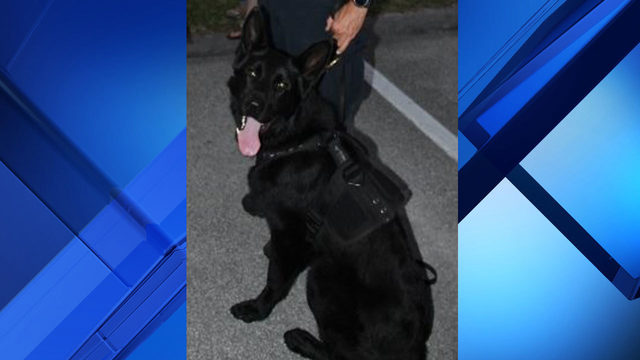 Trial of Sebastian police officer charged in K-9's death begins