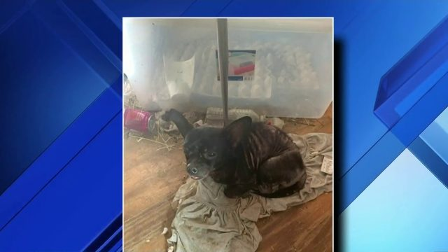 Police: Children, hundreds of animals living among rotting food, animal feces