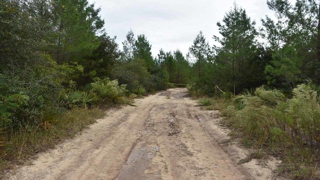 Hunter digs up human remains in Ocala National Forest
