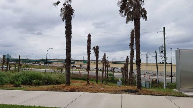 After more than 100 new palm trees die along I-4, who foots the bill?