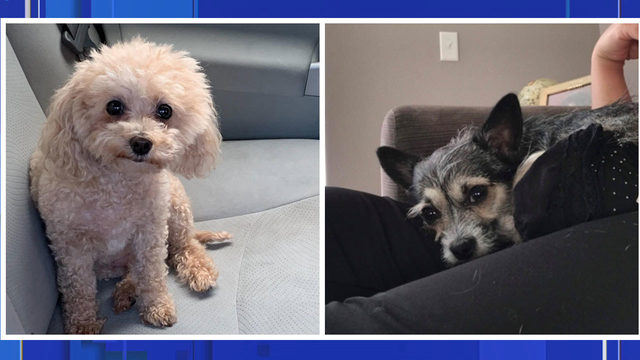 2 dogs killed by roaming dog in Groveland neighborhood