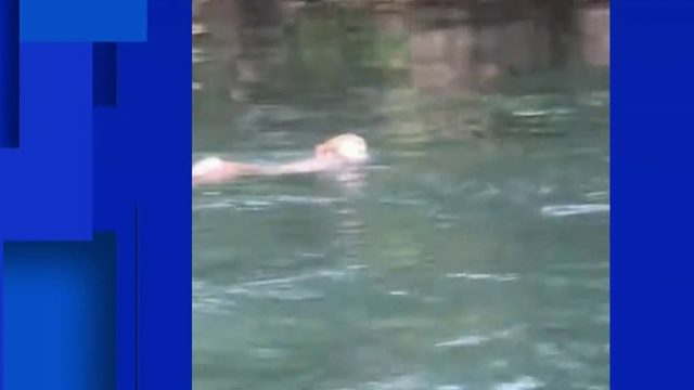 Kayaker shares video of group of monkeys jumping into river at Silver Springs