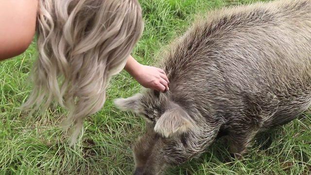 Animals find refuge at Kindred Spirits Sanctuary