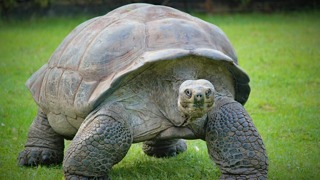 Man pleads guilty in South Florida to trafficking Galapagos tortoise