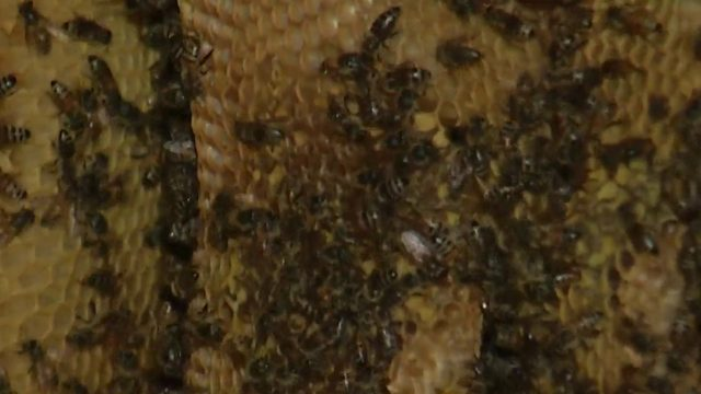 More than 100,000 bees invade Longwood woman's yard